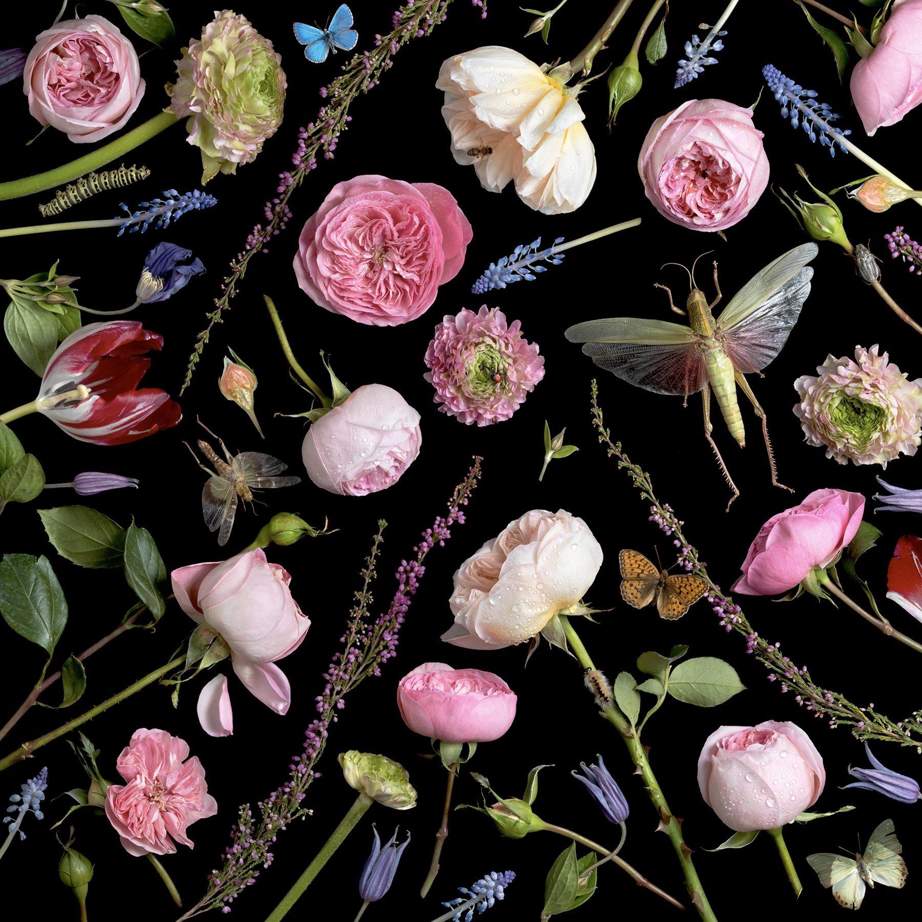 Botanical VI, Juliet Roses