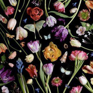 Botanical VII, Tulips