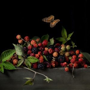Blackberries and Butterfly, After A.C.