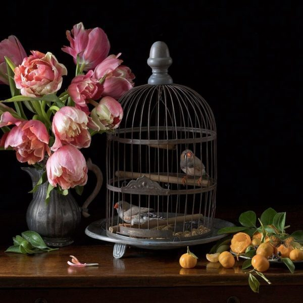 Zebra Finches and Tulips