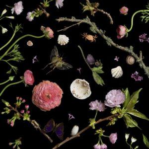 Botanical I, Cherry Blossoms