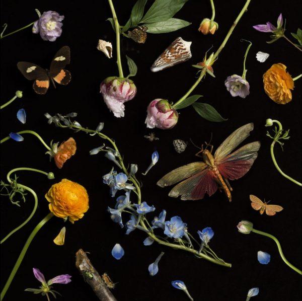 Botanical II, Ranunculus and Delphiniums
