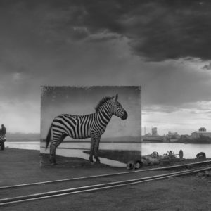 Road to Factory with Zebra