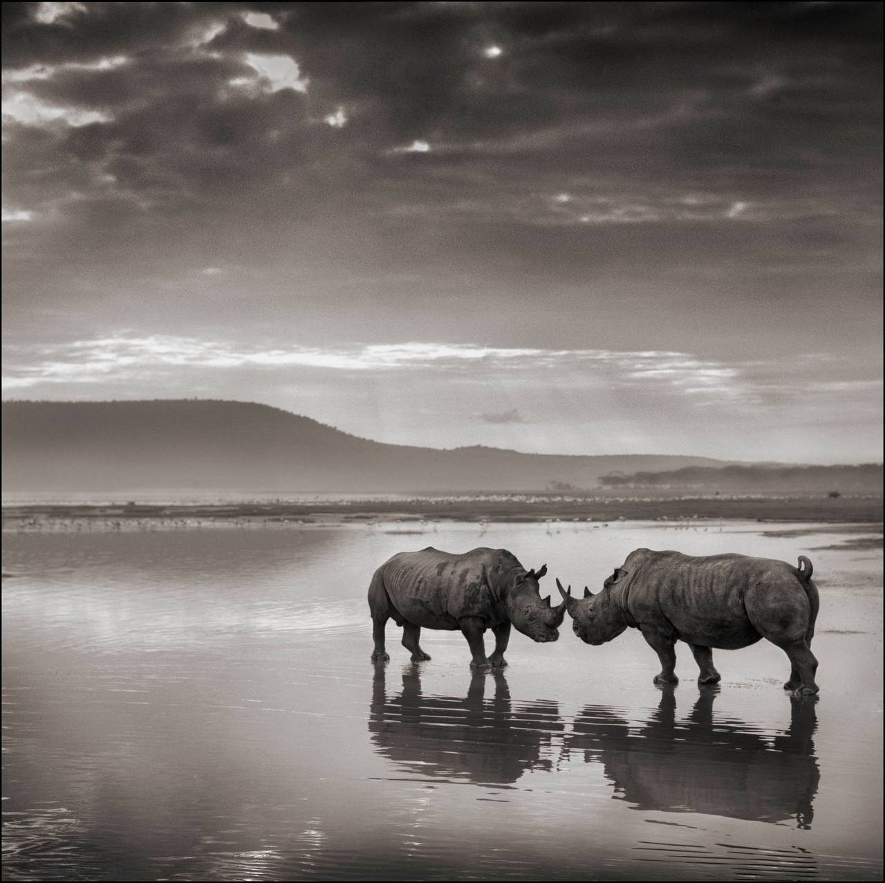 Rhinos in Lake, Nakuru