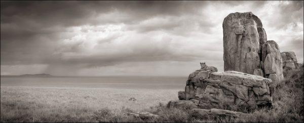 Lion with Monolith, Serengeti