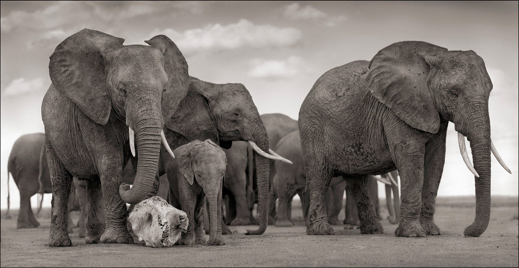 Elephant Skull, Amboseli