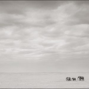 Elephants Alone on Lake Bed, Amboseli