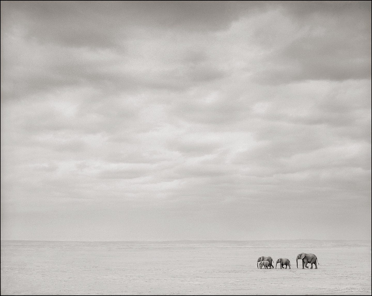 Elephants Alone on Lake Bed, Amboseli
