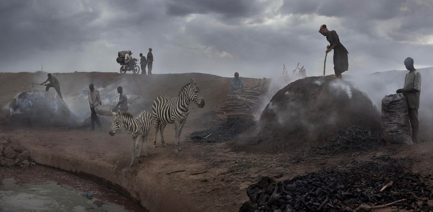 Charcoal Burning with Zebras