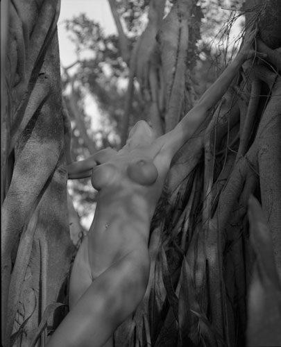 Tree Nude #1