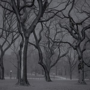 """Deep In A Dream - Central Park - Central Park """"The Mall, 4am"""""""