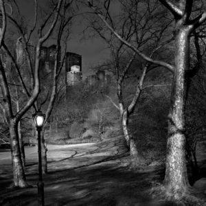 Deep in A Dream - Central Park - 4am London Plane Trees