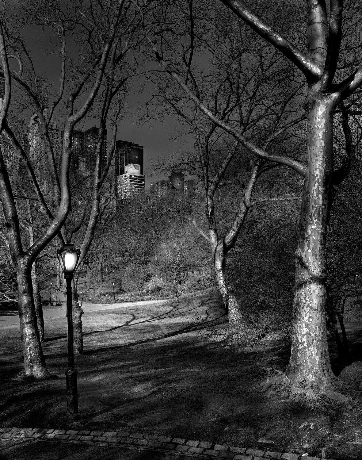 Deep in A Dream - Central Park - 4am London Plane Trees