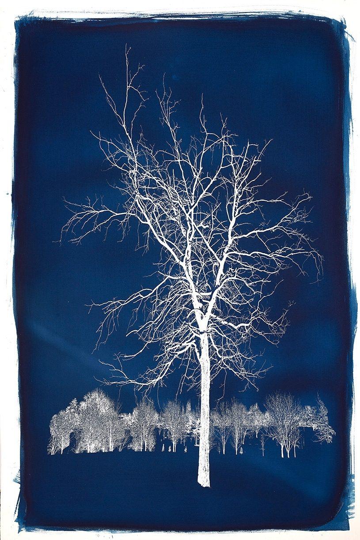 Michael Eastman, Cyanotype #19