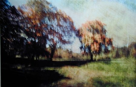 Two Trees in Fall