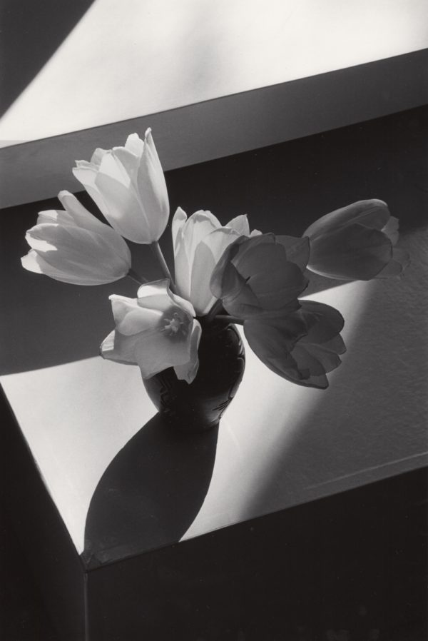 Short Tulips