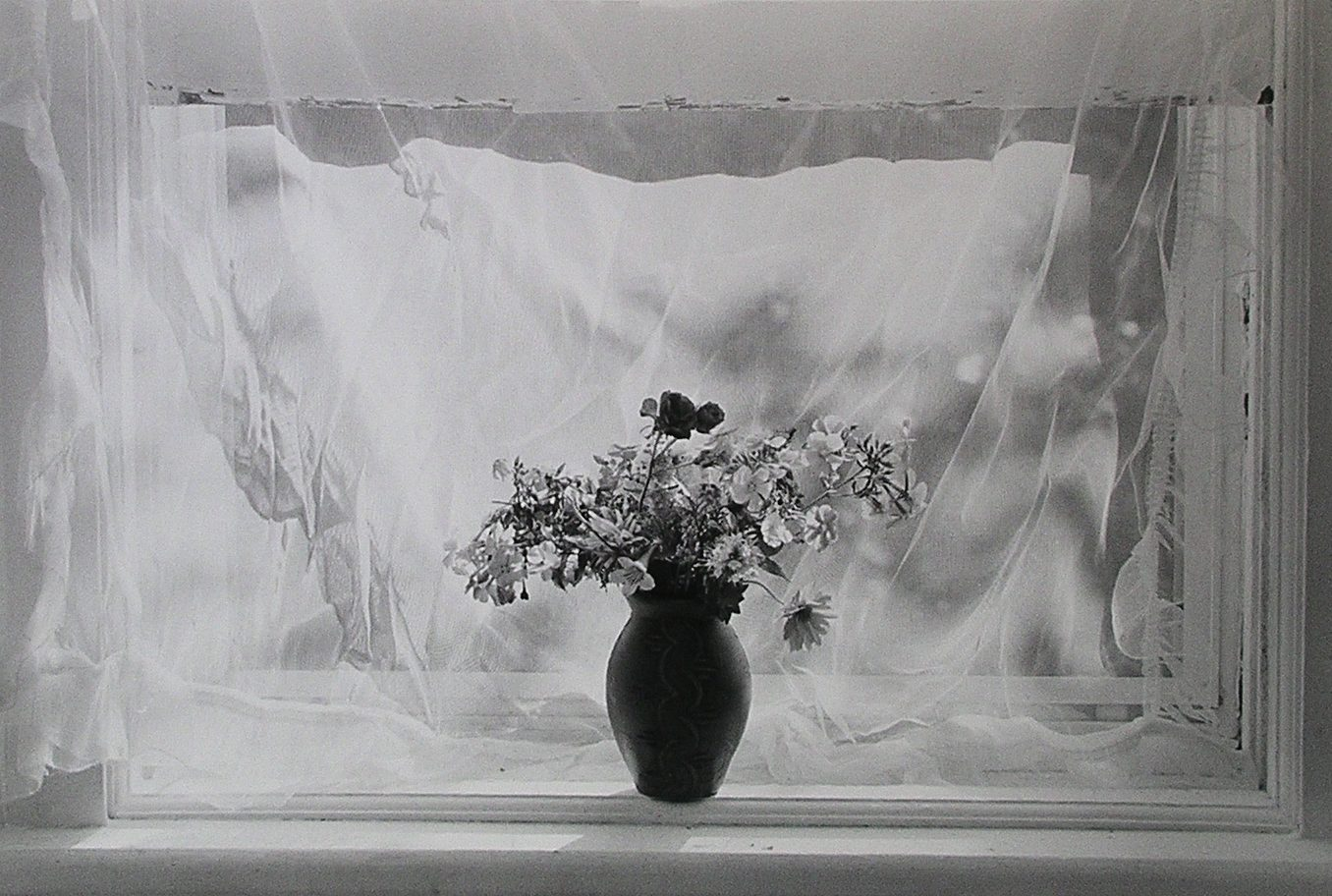 Flower in Vase in front of Window with Curtain
