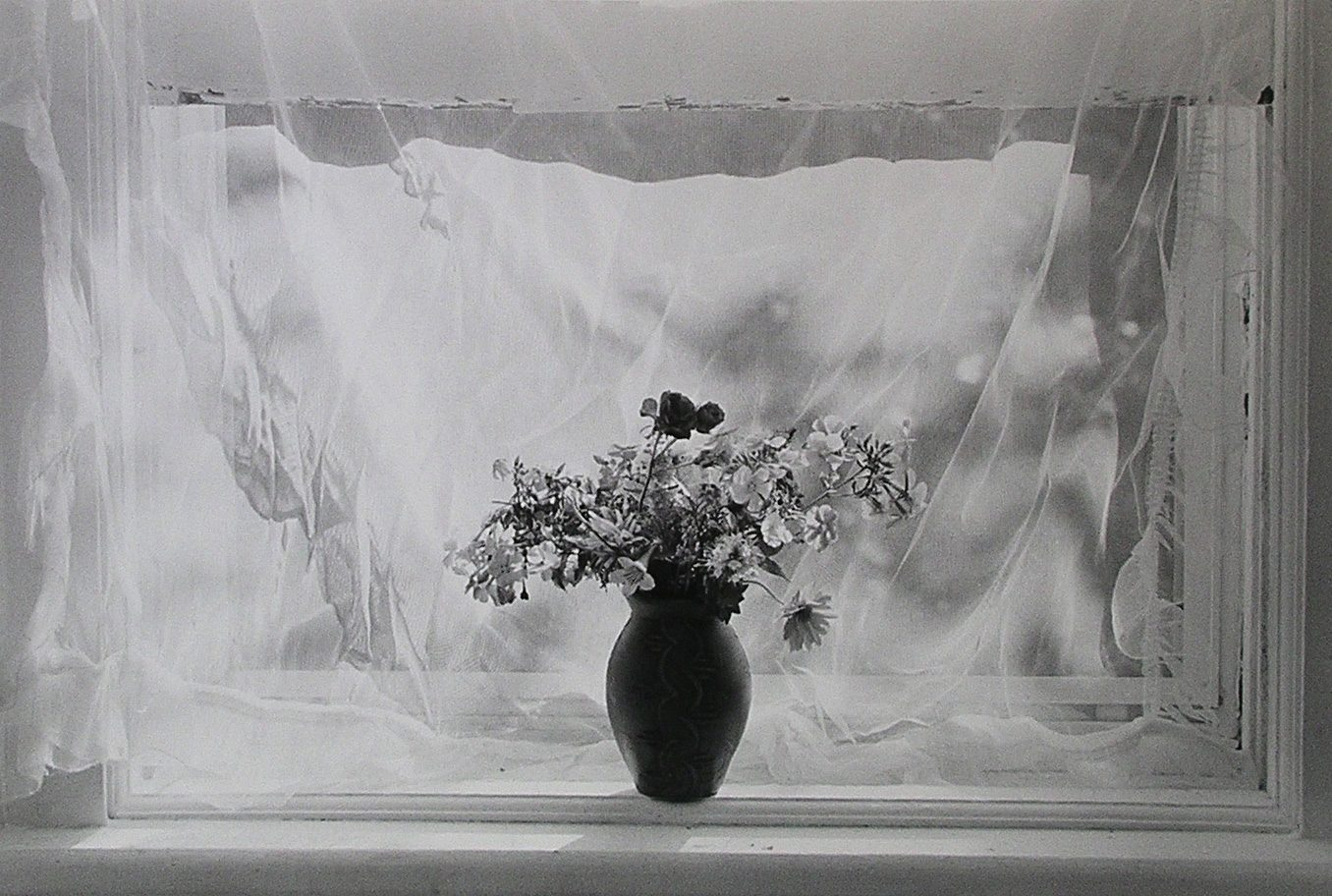 Flower and Curtain