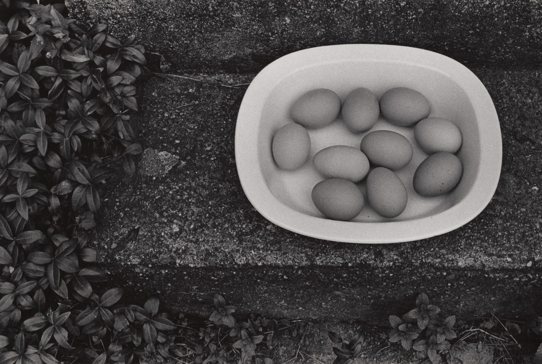 Eggs in White Bowl