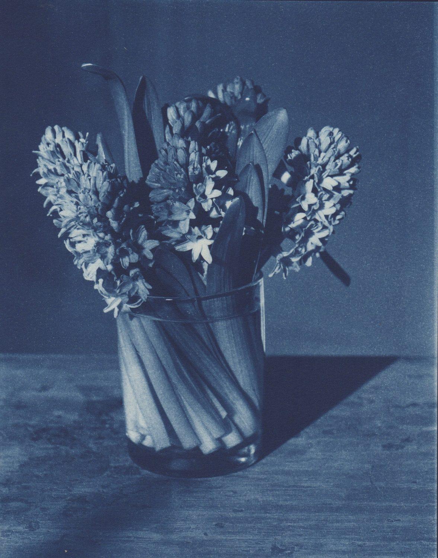 Triple Hyacinths