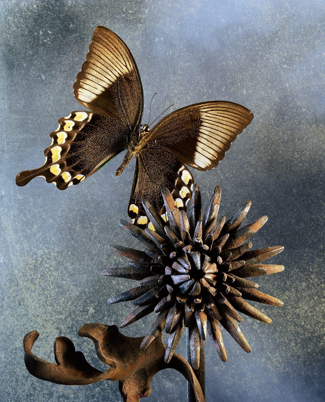 Underneath the Papillon