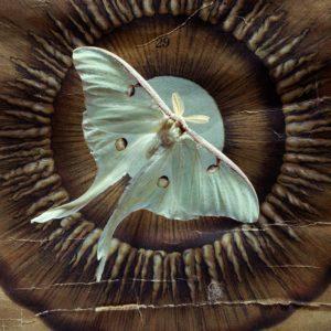Iris Tropea Luna