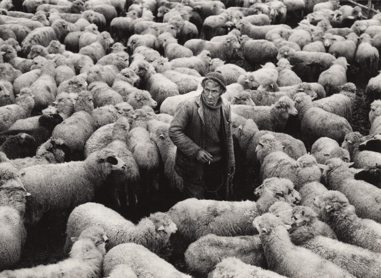 Shepherd with a Flock from Village Zmeychar, Bulgaria