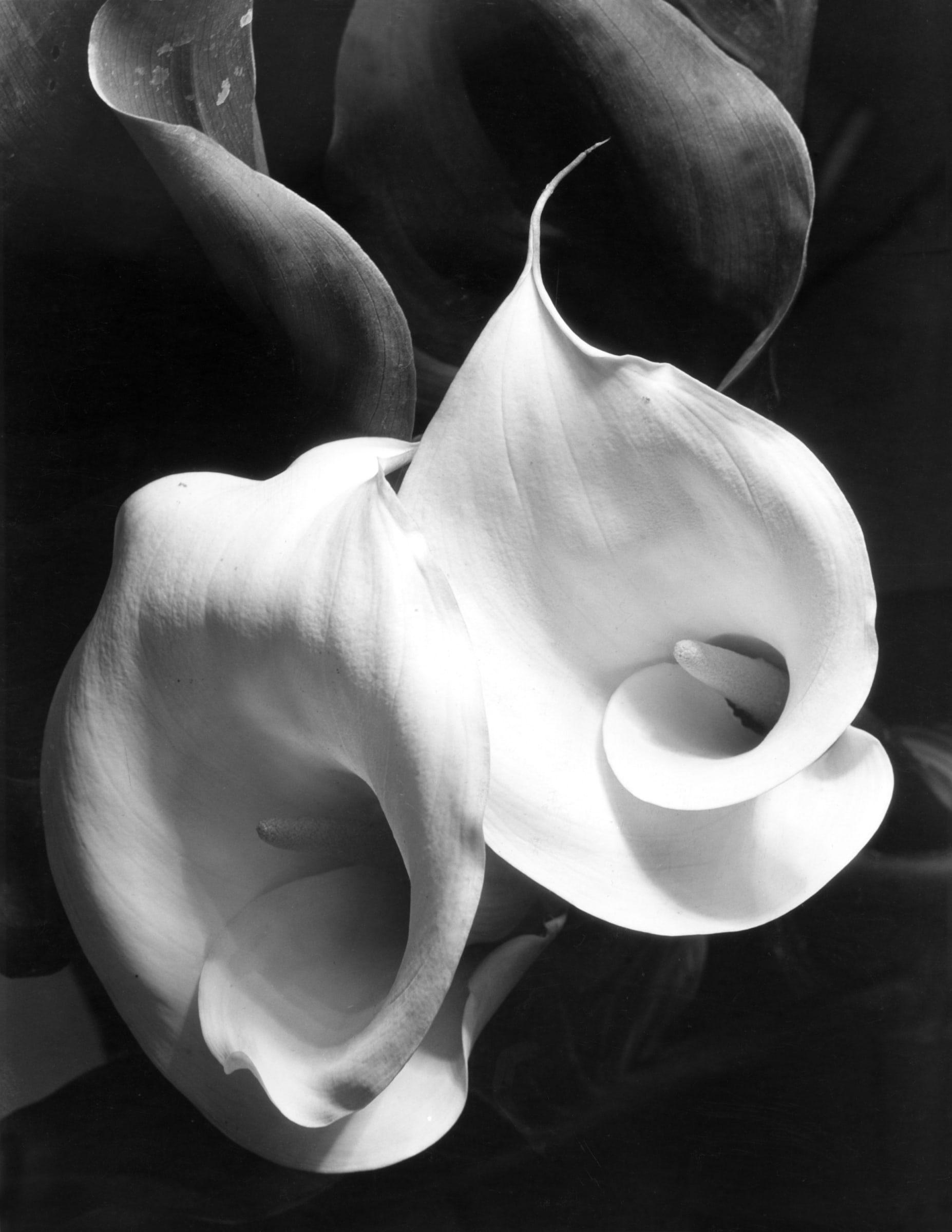 Two Callas