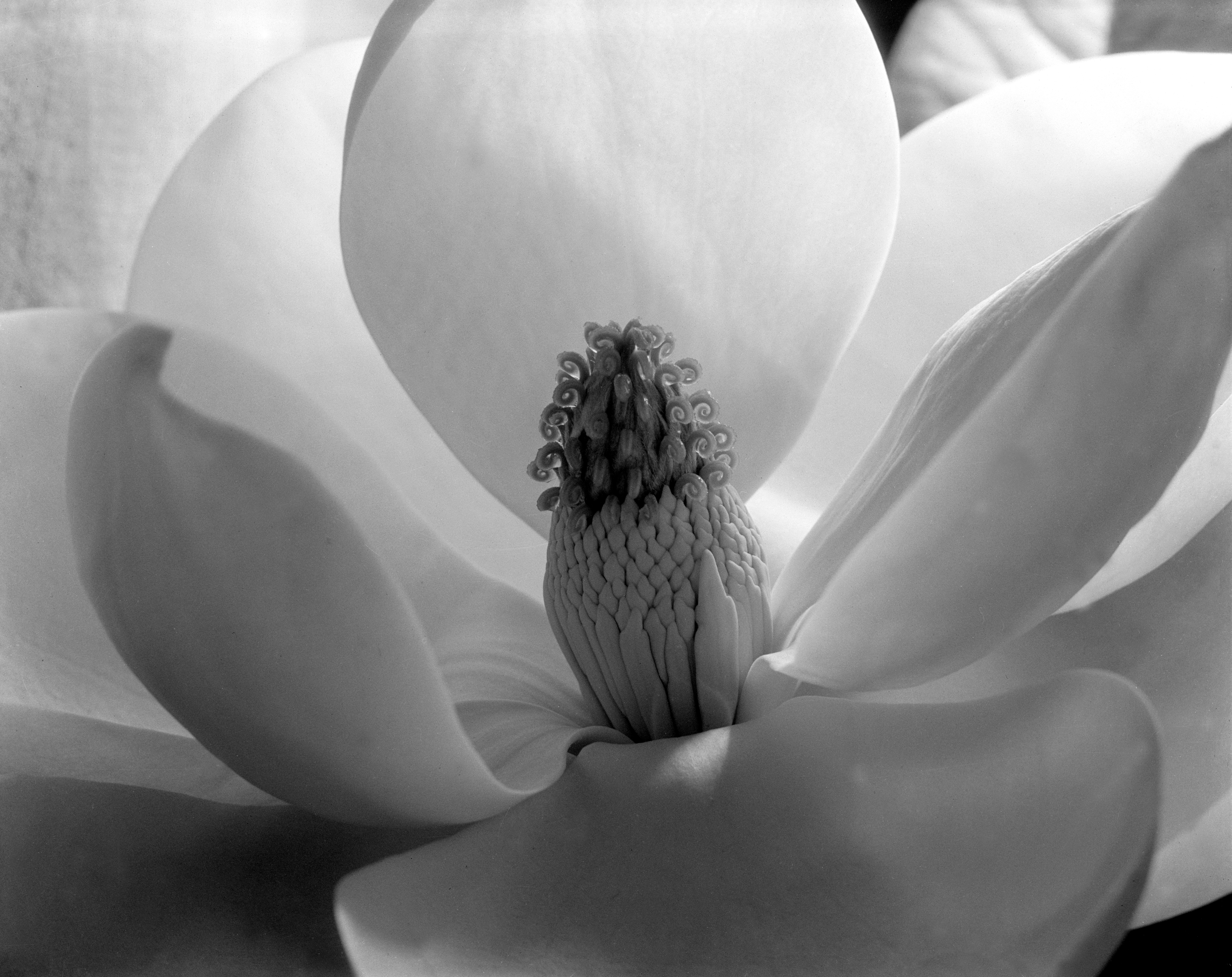 Magnolia Blossom, Tower of Jewels