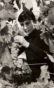 Audrey Hepburn (outside Rome, picking grapes on her farm)