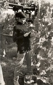 Audrey Hepburn (picks grapes)
