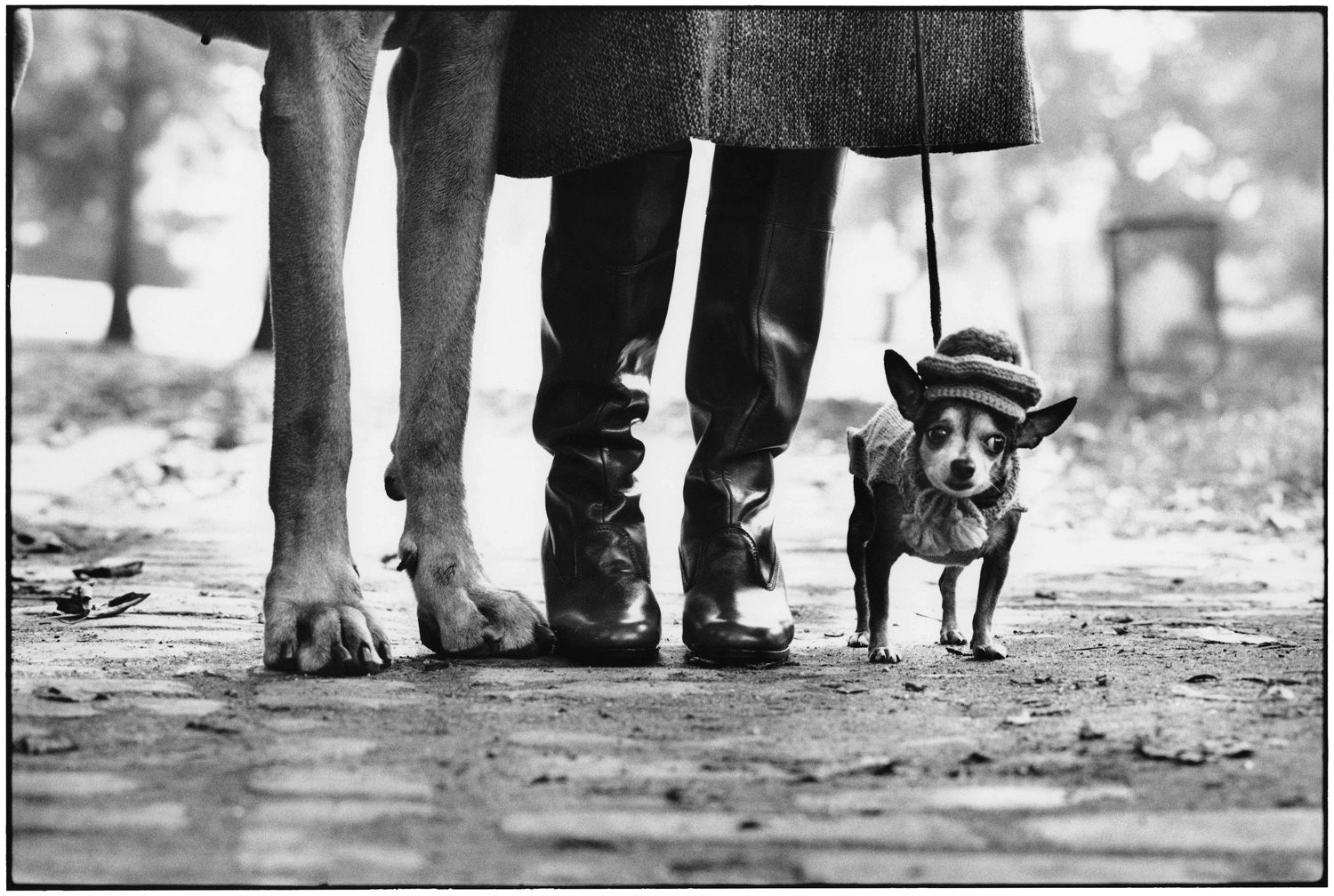 New York City, 1946 (dog with feet)