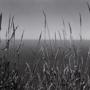 Grass and Sea, Big Sur