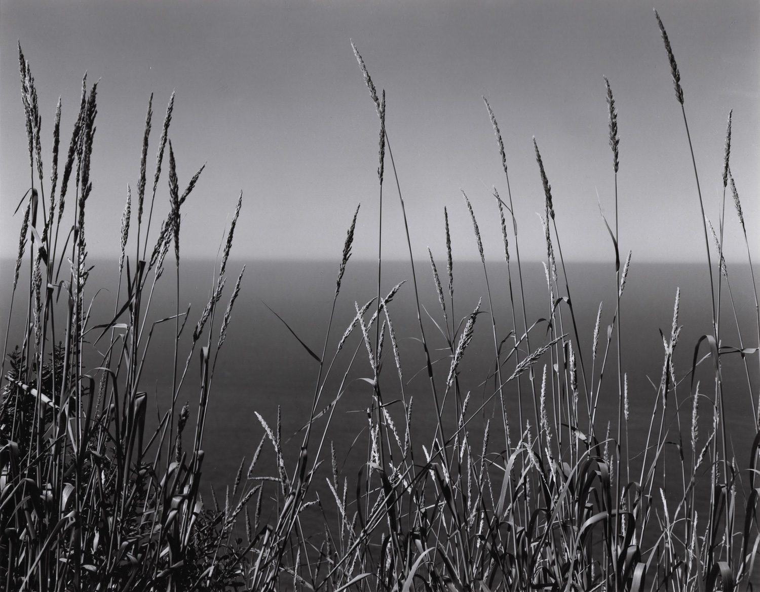 Grass and Sea, Big Sur