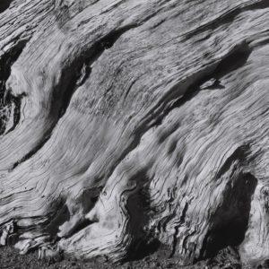 Flaming Cypress Root, Point Lobos