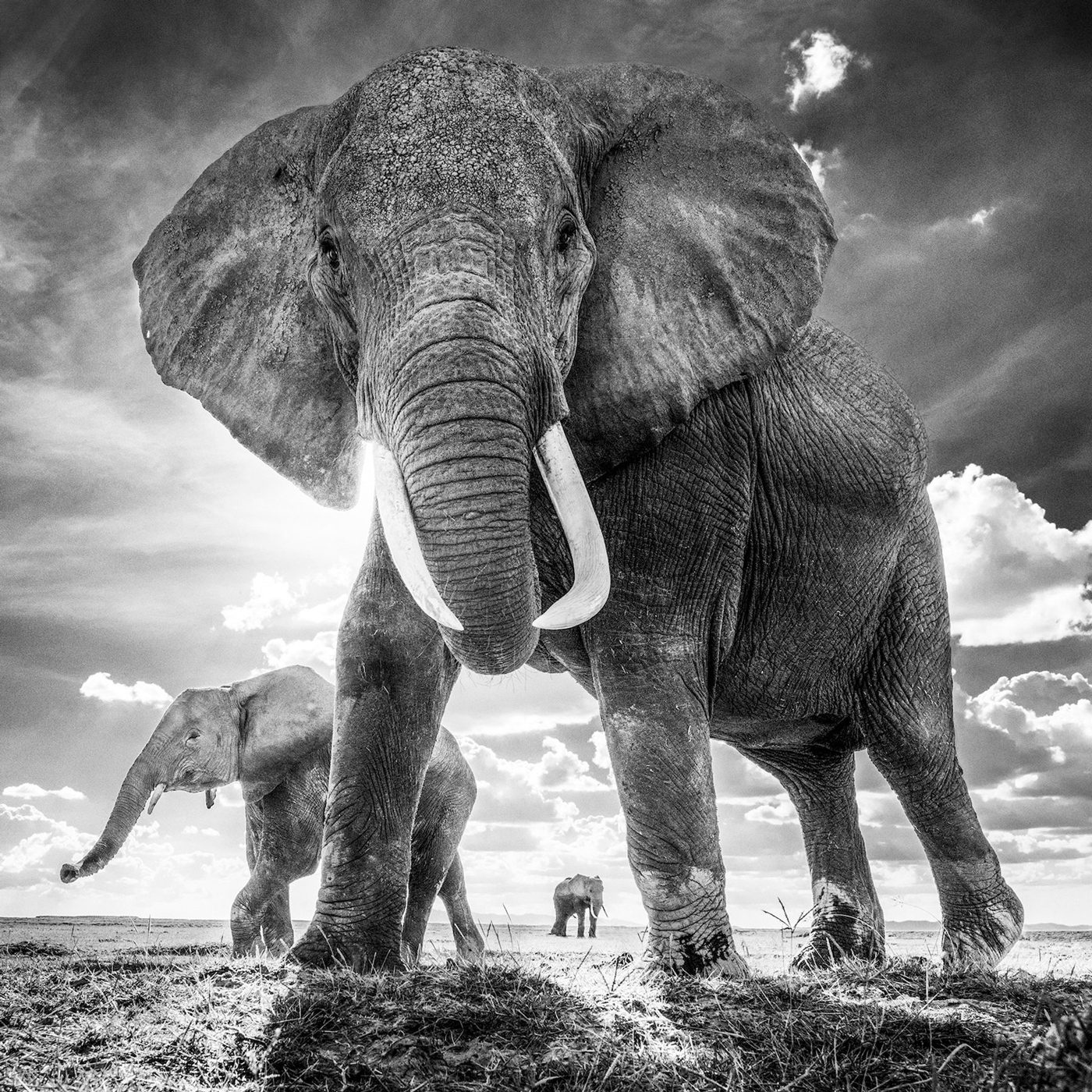 The Untouchables, Amboseli, Kenya 2017