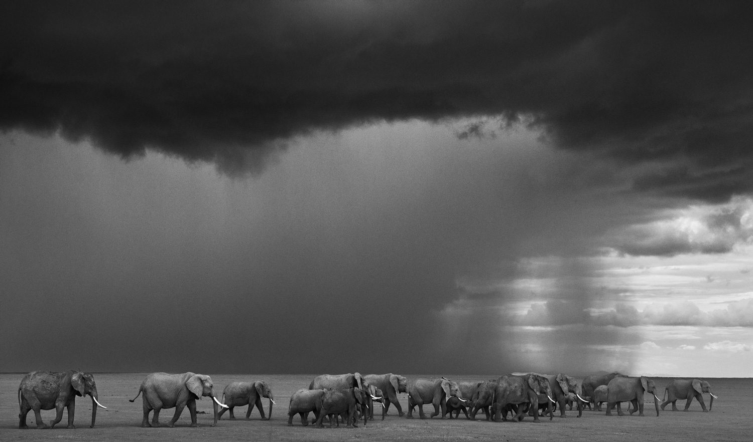 The Gathering Storm, Amboseli, Kenya