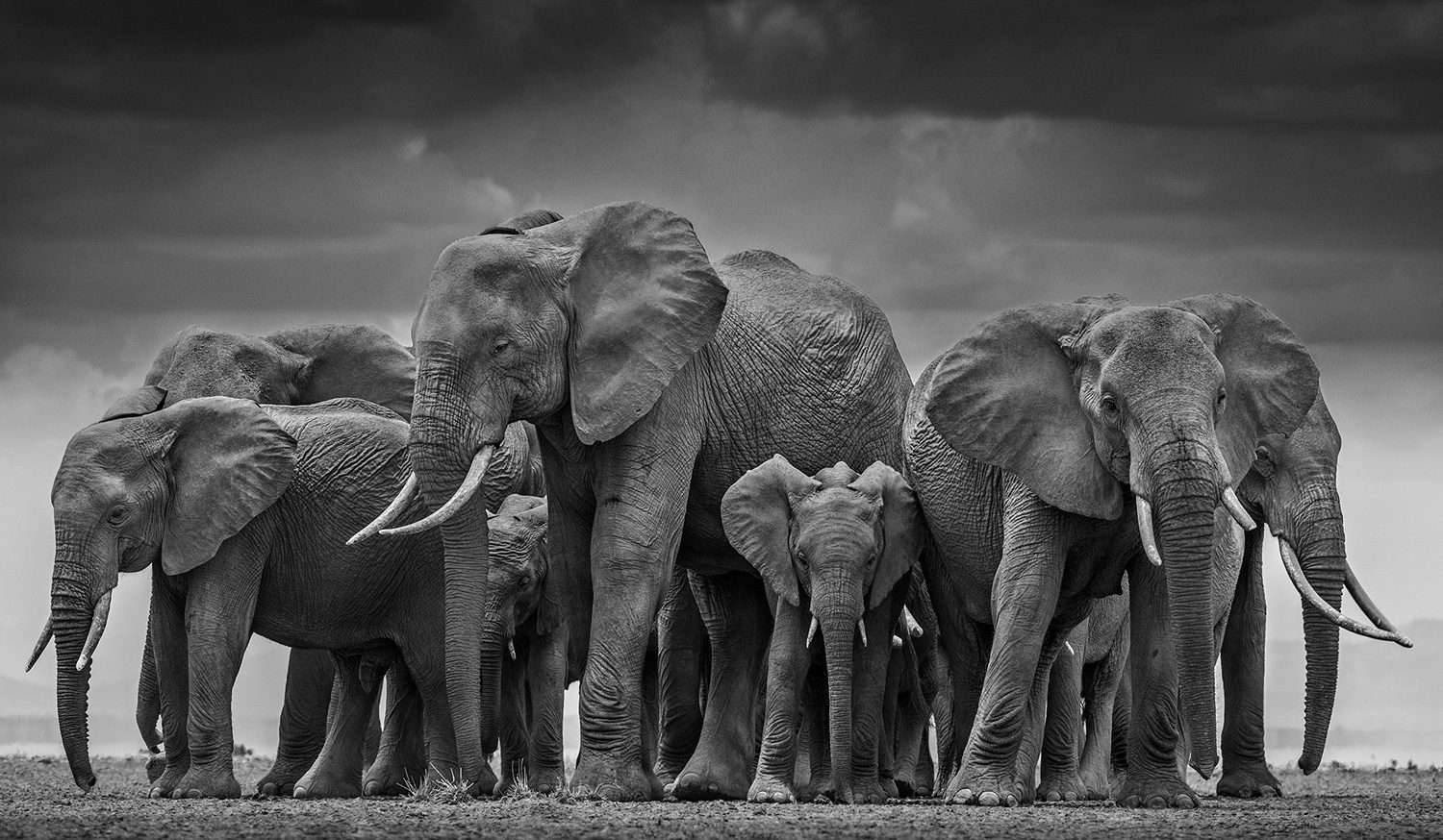 The Circle of Life, Amboseli, Kenya