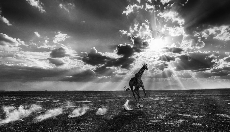 Heaven Can Wait II, Amboseli, Kenya