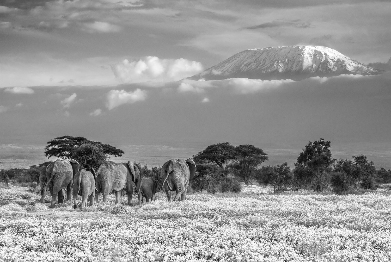 Garden of Eden, Amboseli, Kenya