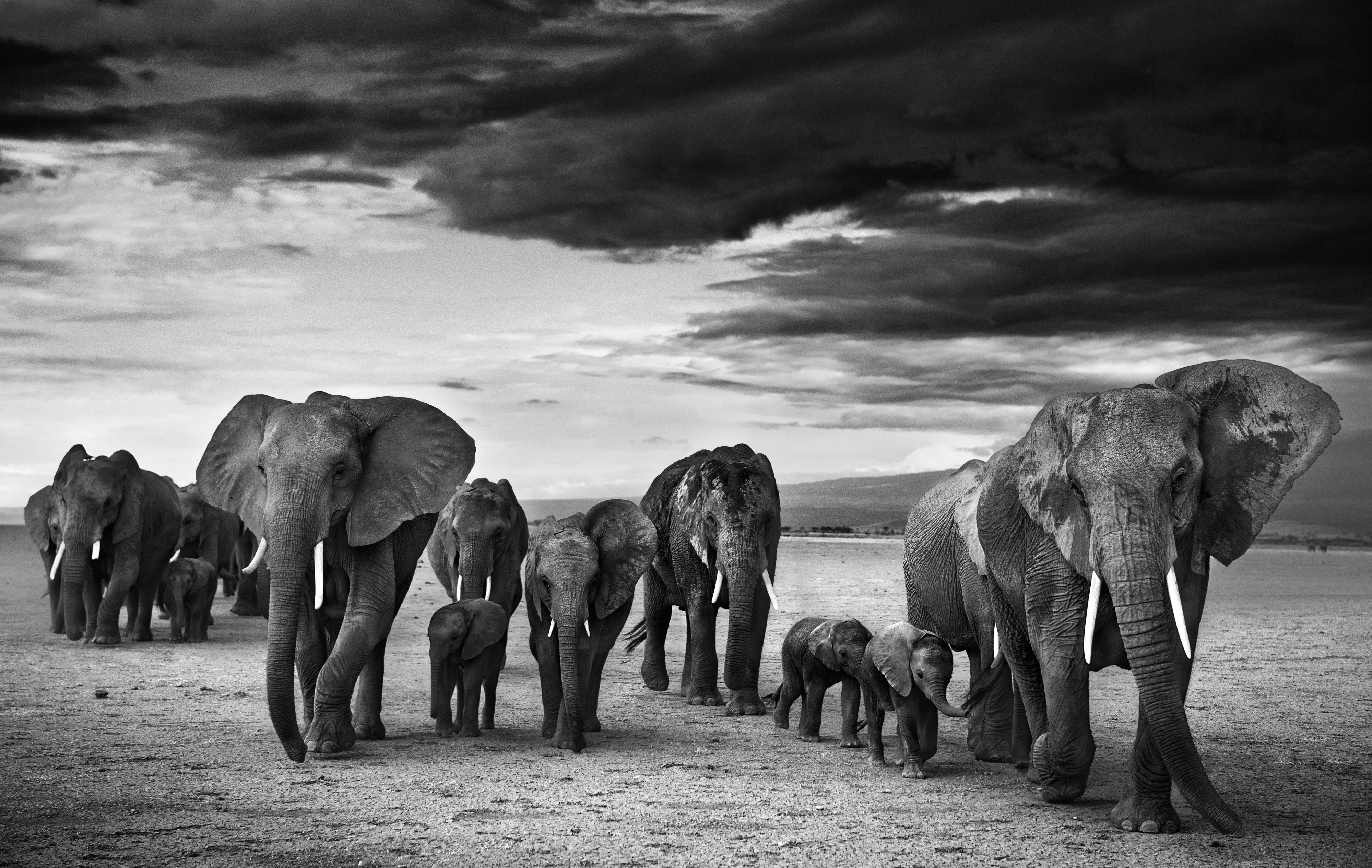 Family, Amboseli, Kenya