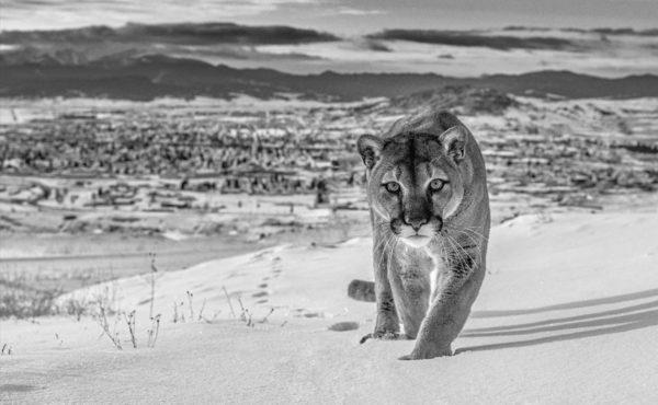 Frontier Town, Butte, Montana, USA