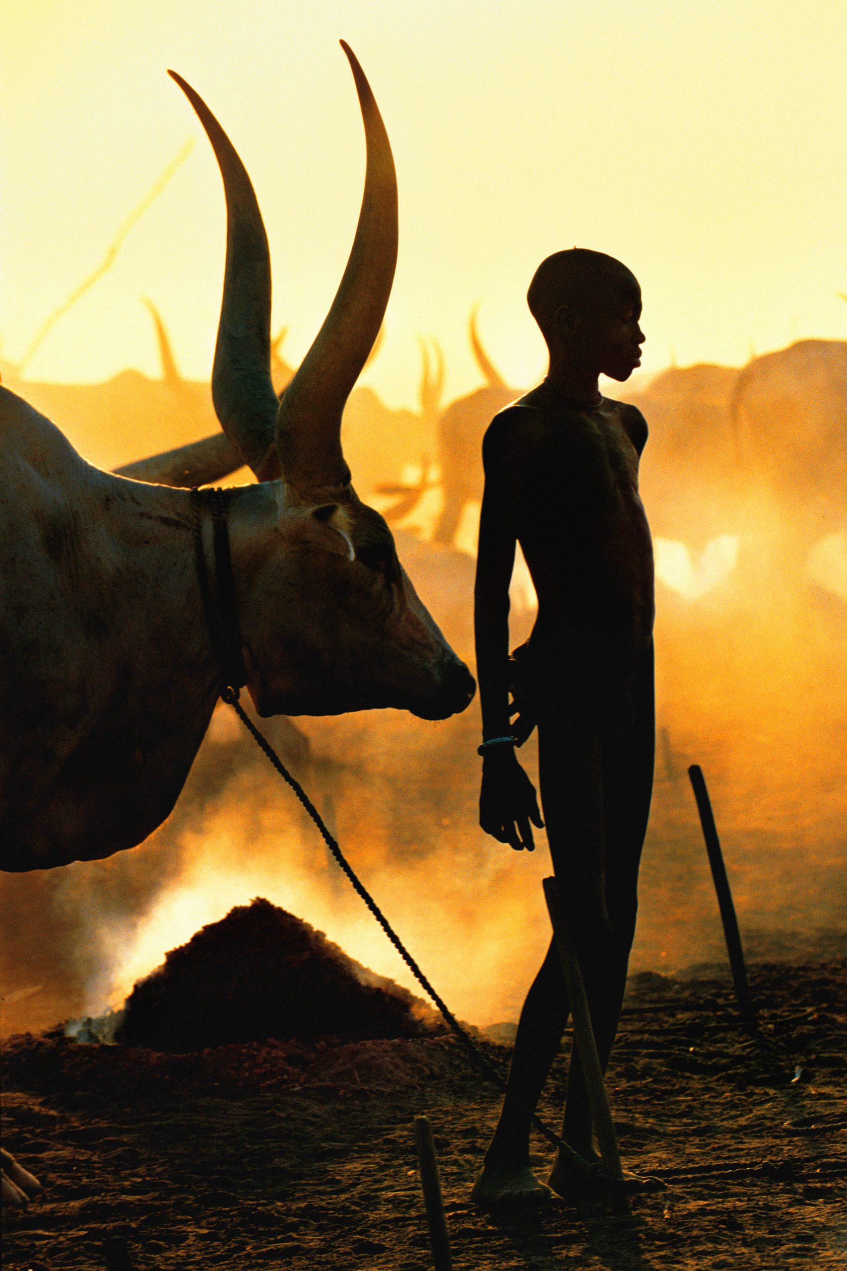 Dinka Boy with Namesake Ox, South Sudan