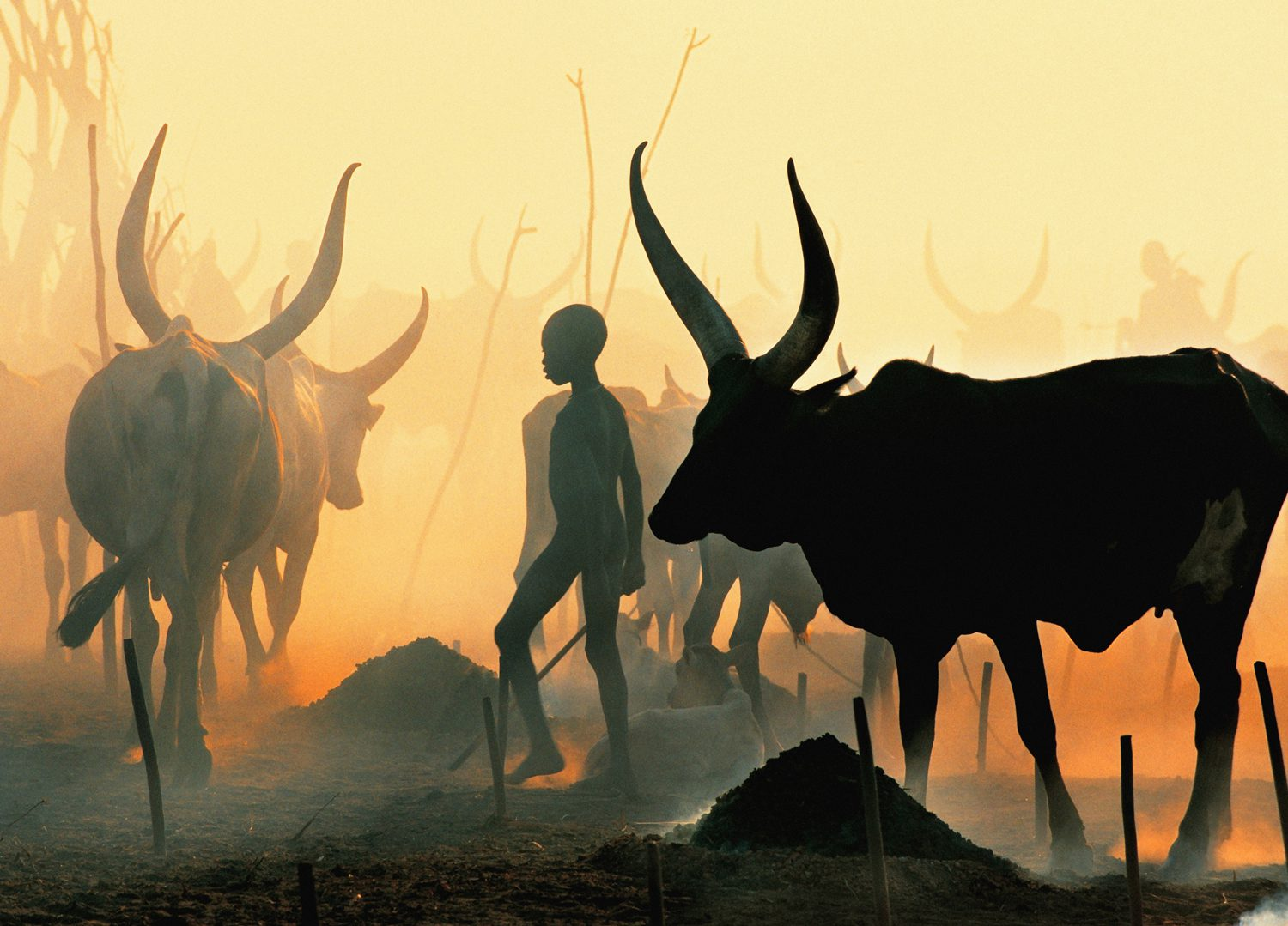 Dinka Boy Leading Black Bull, South Sudan