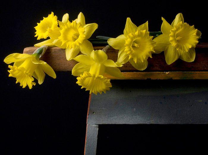 Stillness Series (Daffodils)