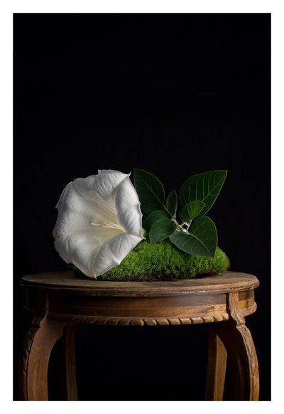 Stillness Series (Datura and moss on my grandmother's table)