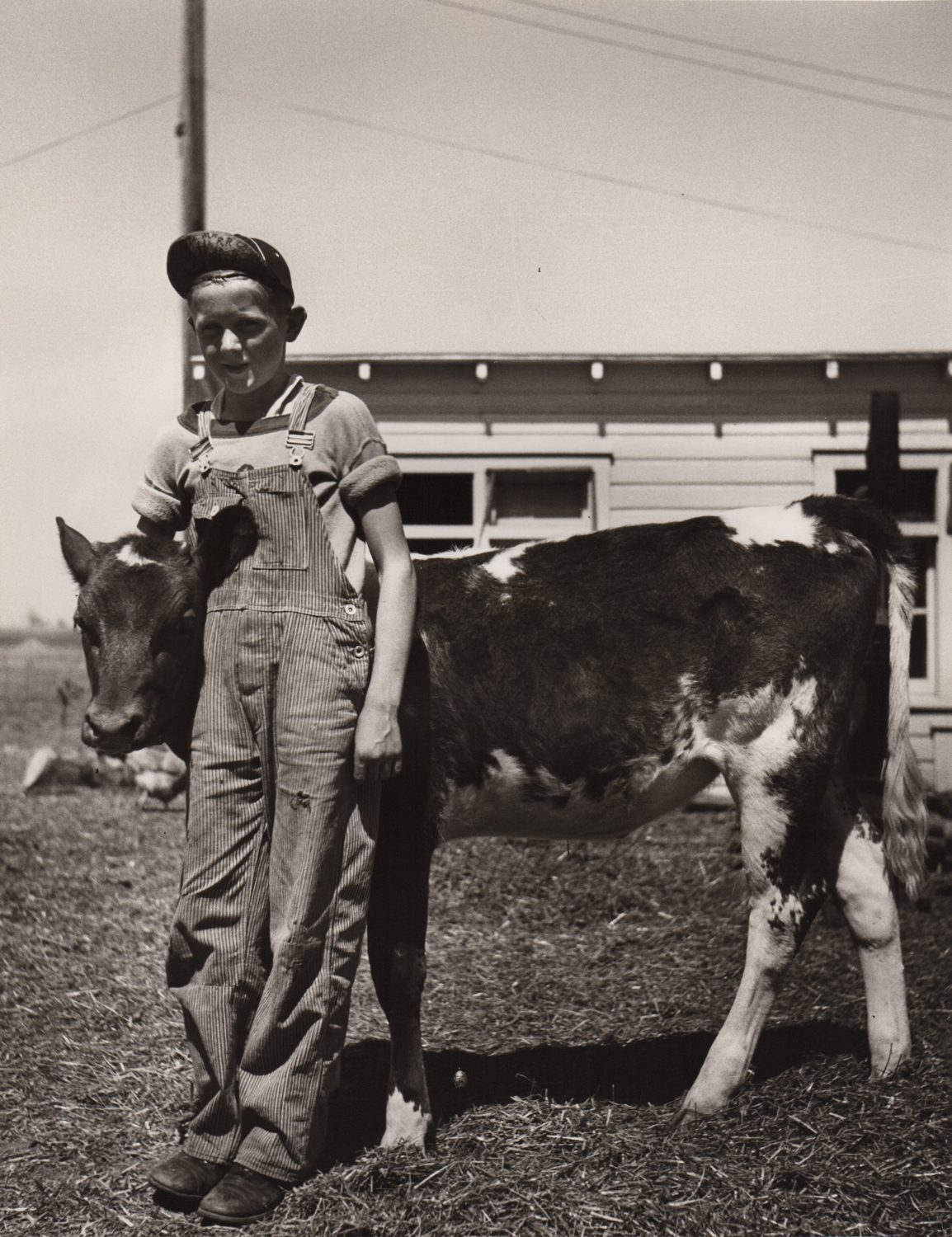 Farmer's Son with Prize 4 H Club Calf, Fairbury Farmstead, Nebraska