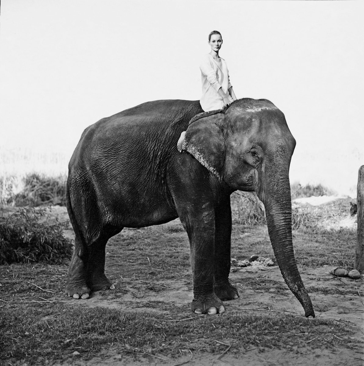 Kate Moss on the Elephant, British