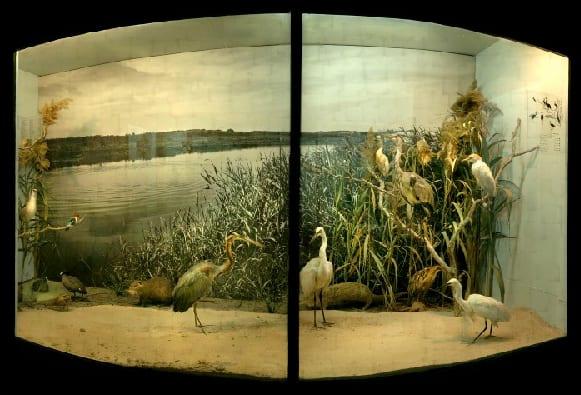 Yuval Yairi, Sill Life Nature Museum