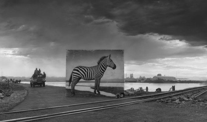 Nick Brandt, Road to Factory with Zebra